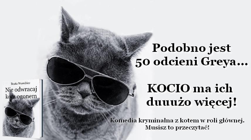 kot reklama na stronę